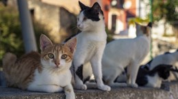 Italy cảnh báo loài mèo nuôi nhiễm virus hiếm gặp gây bệnh dại