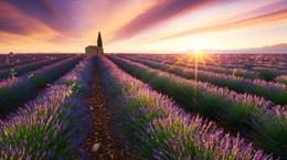 Ai cần Paris khi đã có Provence đầy oải hương tím rực