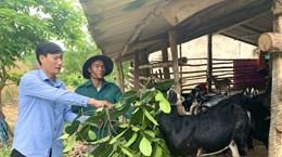 Hành trình 19 năm giúp người dân giảm nghèo ở Quảng Bình