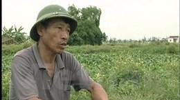 """""""Siêu"""" dự án nông nghiệp: Doanh nghiệp lật lọng?"""