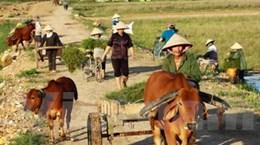 """Về thăm Nghệ An - Những miền quê """"tốt đời đẹp đạo"""""""