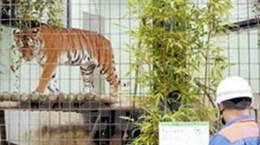 Hổ ở Khu du lịch Đại Nam cắn chết người