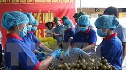 Thu hái nhãn chuẩn bị xuất lô hàng đầu tiên sang Australia, Singapore
