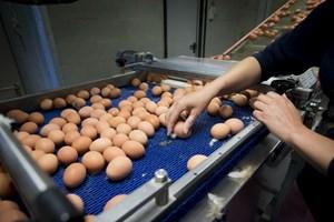 Slovakia phát hiện trứng nhiễm fipronil tại thủ đô Bratislava