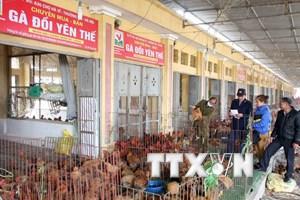 Hà Nội: Chợ đầu mối Hà Vỹ tăng cường kiểm dịch phòng cúm gia cầm