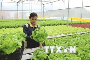 Ứng dụng nông nghiệp công nghệ cao: Thoát nỗi lo được mùa-mất giá