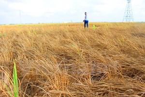 ĐBSCL chịu tổn thất lớn nhất từ các dự án chuyển nước sông Mekong