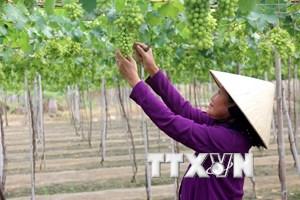 Hỗ trợ chuyển giao công nghệ cho doanh nghiệp đầu tư vào nông nghiệp