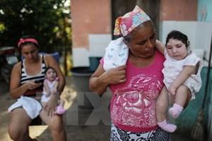 Brazil chưa giải quyết tận gốc nguyên nhân lây truyền virus Zika