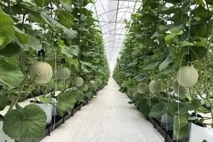Nông nghiệp 4.0: Nhiều cơ hội cho các doanh nghiệp Việt Nam