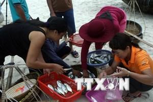 Quảng Trị hoàn thành bồi thường sự cố môi trường biển trước 30/8