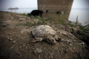 """Cựu TTK LHQ cảnh báo biến đổi khí hậu đã tới """"điểm không quay lại"""""""