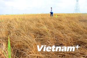 """Nỗi đau hạ nguồn: Liệu cơ chế hợp tác có """"cứu"""" được sông Mekong?"""