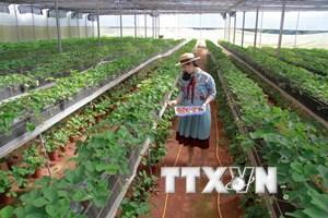 [Infographics] 100.000 tỷ đồng phát triển nông nghiệp công nghệ cao