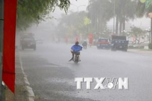 """Phú Yên: """"Cơn mưa vàng"""" diện rộng, cứu hàng nghìn hecta cây"""