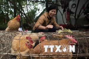 Trung Quốc xác nhận một bệnh nhân nhiễm mới cúm gia cầm H7N9