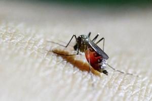 11 người Thái Lan nhiễm virus Zika, sốt xuất huyết tấn công Sri Lanka