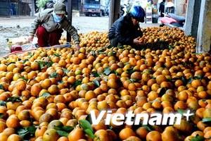 Xóa sổ chợ Long Biên?