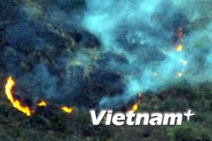 Dập cháy cứu rừng
