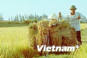 Nhà nước thu mua toàn bộ lúa gạo cho nông dân