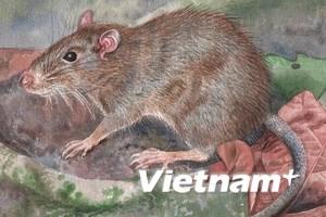 Phát hiện giống chuột mới