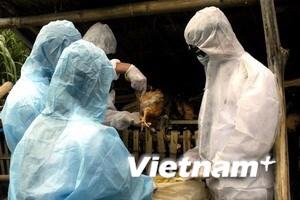 Bệnh nhân H5N1 đầu tiên tử vong trong năm 2010