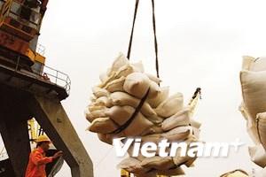 Việt Nam tham gia sâu hơn vào thị trường gạo đồ