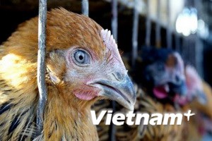 TQ lại phát hiện bệnh phẩm dương tính với H7N9