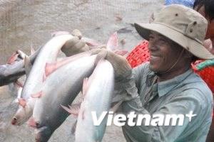 Cam kết giúp cá tra