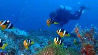Đại dương Maldives mê hoặc du khách với vẻ đẹp thuần khiết