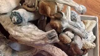 Hà Nội: Khởi tố nam sinh sản xuất 'nấm thức thần' chứa ma túy