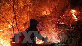 Vụ cháy rừng tại núi Nầm ở Hà Tĩnh đã cơ bản được khống chế