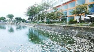 [Video] Cá chết nổi 'trắng' hồ điều tiết ở thành phố Đà Nẵng