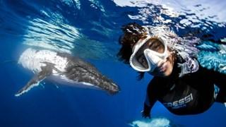"""Nữ thợ lặn liều mình chụp ảnh """"tự sướng"""" cùng con cá voi 40 tấn"""