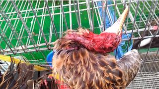 [Video] Chặn 'cầu nối' tiêu thụ động vật hoang dã để tránh dịch bệnh