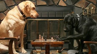 [Video] Những giống chó thông minh nhất trên thế giới