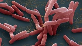 [Video] Những điều cần biết về bệnh truyền nhiễm Whitmore