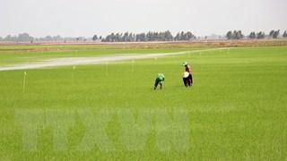 Liên kết thực hiện cánh đồng lớn và bao tiêu sản phẩm cho nông dân