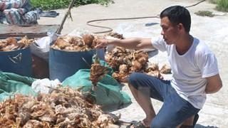 Hàng chục người ném đá vào trang trại, làm chết hơn 1.200 con gà