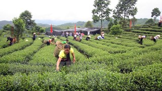 Lai Châu khuyến khích liên kết sản xuất, tiêu thụ nông sản