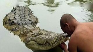 """Kỳ lạ con cá sấu """"ăn chay"""", chưa từng nếm thịt và tấn công người"""