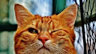 [Video] Những hành động kỳ quặc của động vật khiến nhiều người tò mò