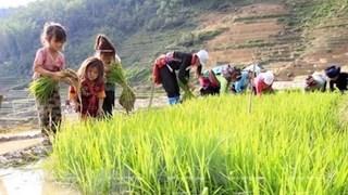 [Video] 1,75 triệu trẻ em tham gia lao động tại Việt Nam