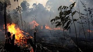 [Video] Lửa tiếp tục bùng cháy tại rừng rậm Amazon của Brazil