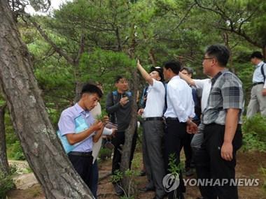 Triều Tiên sẽ tới Trung Quốc dự hội nghị hợp tác lâm nghiệp Đông Á