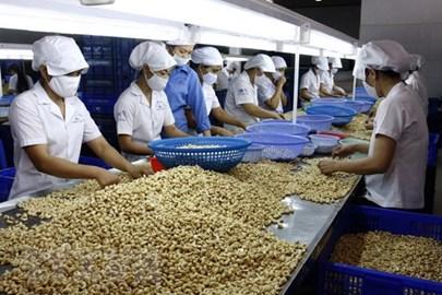 Hiệp định EVFTA: Cơ hội xuất khẩu tỷ USD cho trái điều