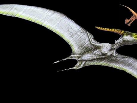 Phát hiện kinh ngạc về sự tiến hóa ở các loài cổ sinh vật biết bay   Khoa học   Vietnam+ (VietnamPlus)
