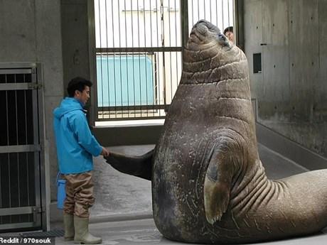 Ngỡ ngàng trước kích thước khổng lồ của các loài động vật - kết quả xổ số ninh thuận