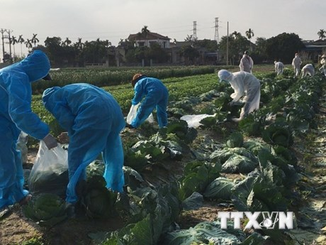 Hải Dương: Hỗ trợ hơn 30 tấn rau, củ cho các khu bị phong tỏa, cách ly