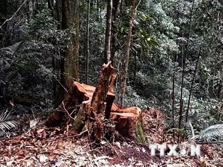 Kon Tum: Lâm tặc ngang nhiên mở lối phá rừng ở huyện Đăk Tô
